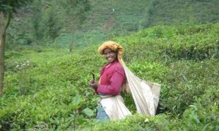 Teas of India