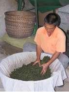 Exploring Fujian teas