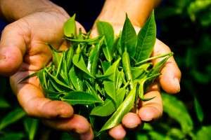 Leaves Rajiv May