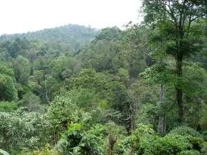 Tea Agro-Forest