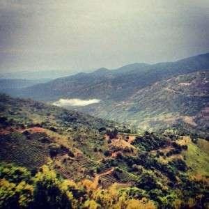 puerh valley