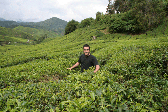 The World of Tea wins at World Tea Awards