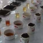 Turkish-Tea-Tasting