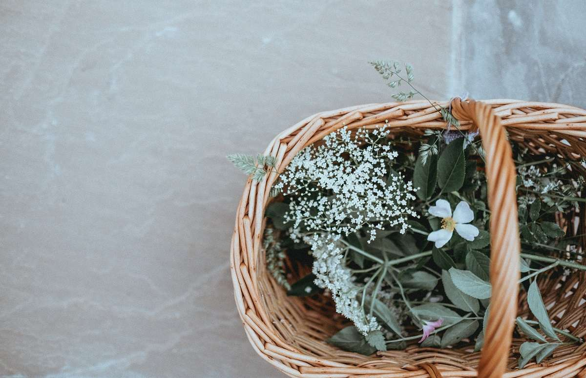 Favorite Herbs for Tea – How to Grow Your Own Tea Garden