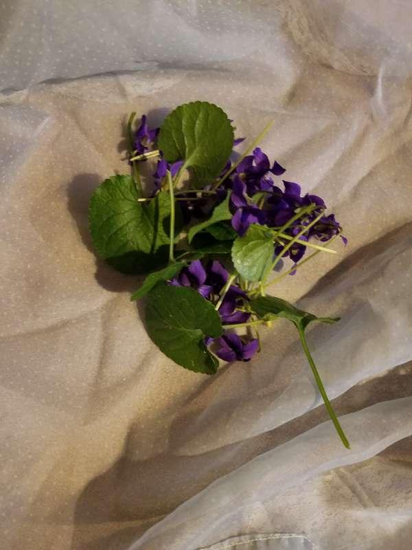 Violet Leaf Tisane