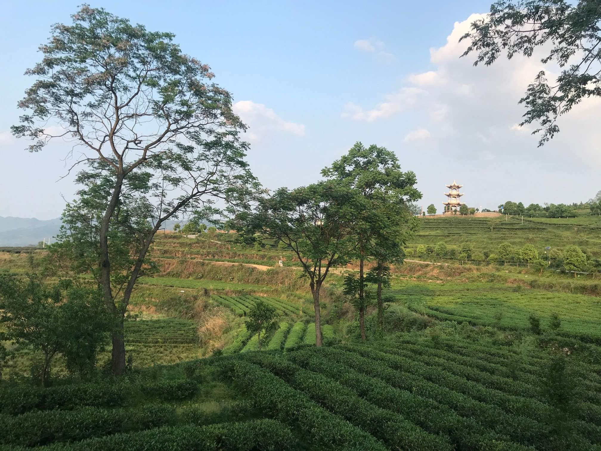 Precious State: The Unusual and Obscure Teas of Guizhou  – Part 3