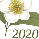 Sac Tea Fest 2020