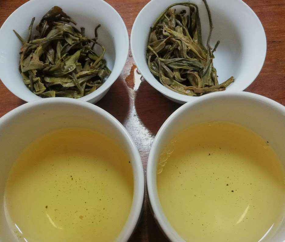 Combined Tea Sample Tasting – Part 3