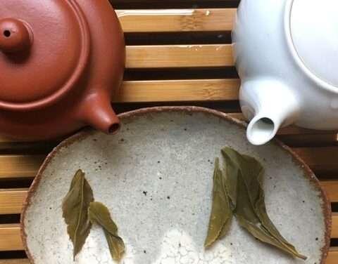 Wild Organic Tea – Second Installment