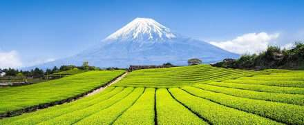 Japanese Tea Farming Technological Innovation – Part 2