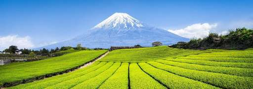 Japanese Tea Farming Technological Innovation – Part 2