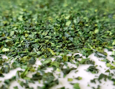 The Essential Guide to Matcha: Matcha Processing