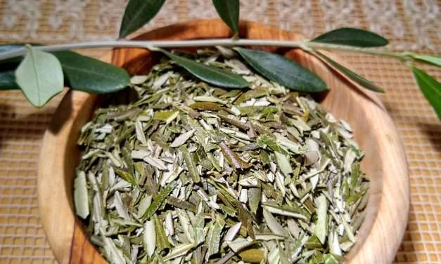 Interview: Olive Leaf Tea
